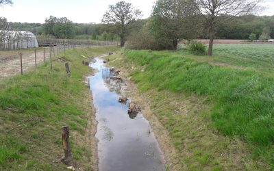 Ökologische Aufwertung Helmerbach